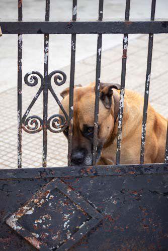 10 Reasons Your Dog Barks Dog Barking Adult Dog Training Dogs