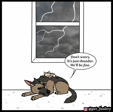 New Pixie And Brutus Comic Hits Hard In The Feels - World's largest collection of cat memes and other animals Funny Animal Comics, Dog Comics, Funny Animal Memes, Cute Funny Animals, Funny Memes, Funny Gifs, Cat Memes, Collie, Anxiety Cat