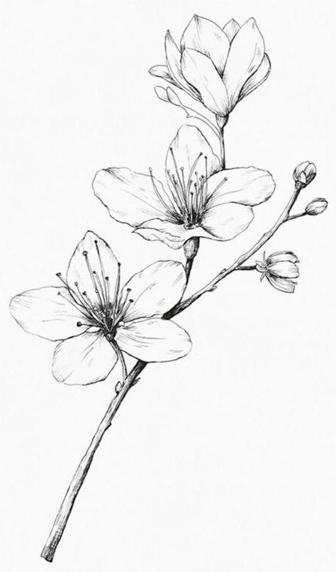 48 Flower Pencil Drawing Ideas
