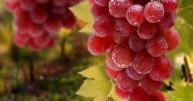 الصادرات العنب يتصدر أهم 20 سلعة غذائية من صادرات مصر غير البترولية أعلنت الهيئة العامة للرقابة على الصادرات والواردات عن Grapes Grape Wallpaper Red Grapes