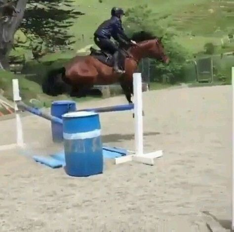 Funny horses compilation😂   - Tiere - #Compilation #funny #Horses #tiere