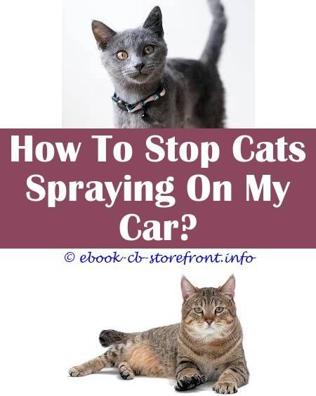 8 Graceful Ideas Do Female Cats Or Male Cats Spray Do Fixed Cats