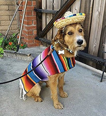 Amazon Com Baja Ponchos Dog Sombrero Hat Funny Dog Costume