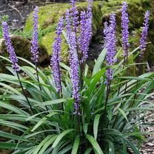 Fonkelnieuw Afbeeldingsresultaat voor bloeiende schaduwplanten VG-59