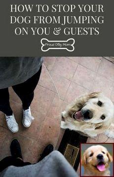 Dog Behavior Rehab Yelp And Dog Training Courses Tafe Dog