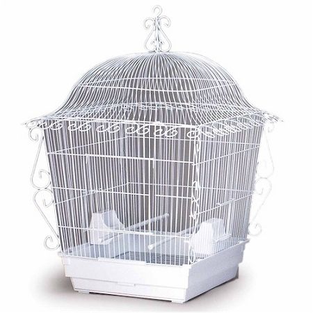 This Cage Makes Perfect Home For Medium Birds Such As Cockatiels Doves Conures And Similar Size Bird Birdcage Smallbirdcage Wh Bird Cage Bird Cages Cage