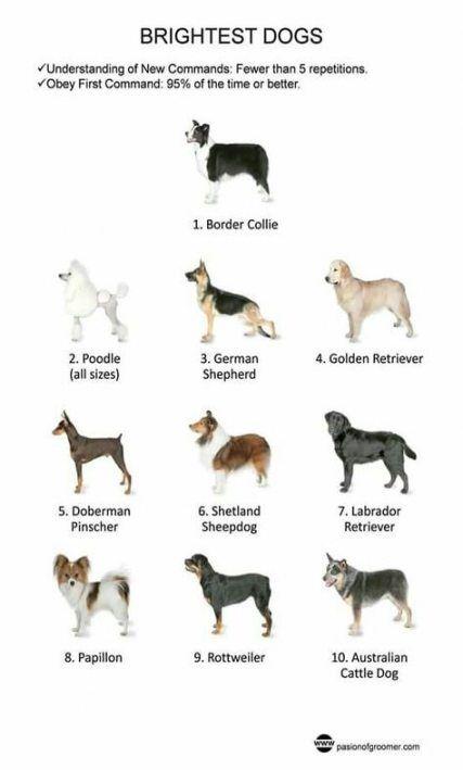 Super Dogs Breeds Chart Pets 58 Ideas