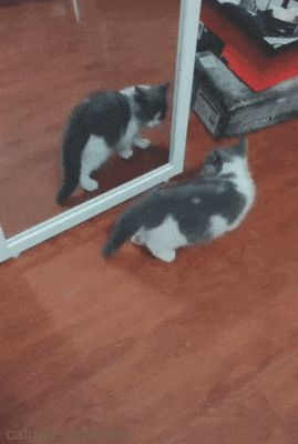 Showing Moves to That Other Kitten