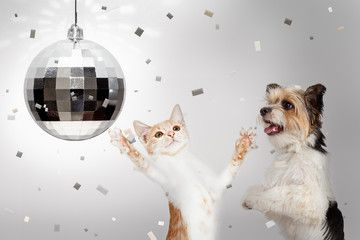 Dog And Cat New Years Celebration Party Ad Cat Dog Years Party Celebration Ad In 2020 Happy Dogs Dancing Cat Happy New Year Dog