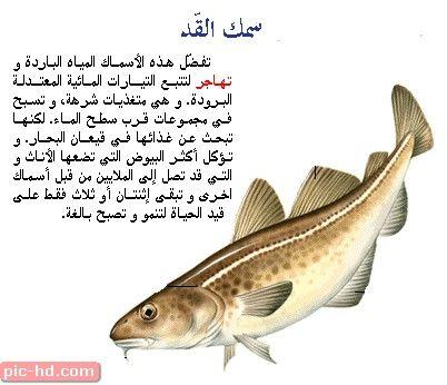 اجمل صور سمك القد صور سمك القد وفوائده Fish Pet Pics Pets