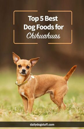 Top 5 Best Dog Foods For Chihuahuas Best Dog Food Dog Food