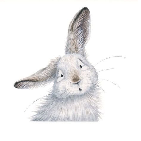 Kristin Makarius Illustration on Instagram: Another one in the series! This time is the snowshoe hare called Albert.       #rabbit #kidlit #childrensillustrator