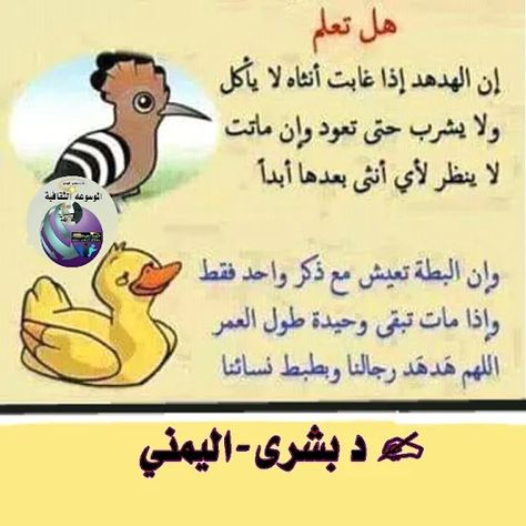 Pin By Shahenda Alnagar On Citations Fun Quotes Funny Funny Arabic Quotes Circle Quotes