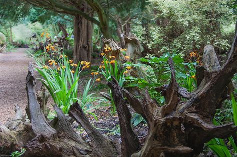 The Stumpery by Brian Smithson (Old Geordie), via Flickr ~ A wonderful woodland garden at Prince Charles' High grove estate