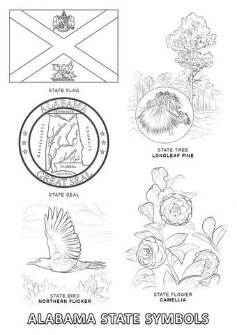 Alabama State Symbols Coloring Page Coloring Pages Flag Coloring Pages State Symbols In 2021 Flag Coloring Pages Bird Coloring Pages Flower Coloring Pages