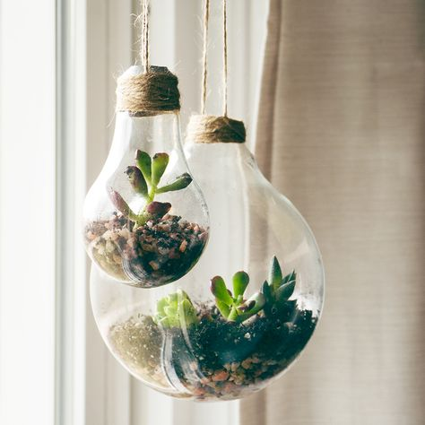 Grow Succulents In Virtually Anything Container Ideas For Succulents Succulent Arrangements Diy Succulents Diy Succulent Planter Diy