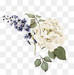 2020 的 Flowers White Vector Pattern Flowers Png And Vector