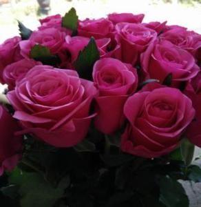 Long Stemmed Roses Pink Bunga Mawar Warna