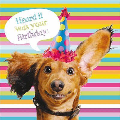 Dachshund Birthday Card Sausage Dog Party Funny Dog Glitter Greeting Card New Dachshund Birthday Happy Birthday Dachshund Dog Birthday Wishes