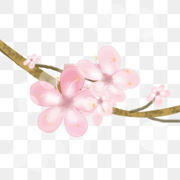 Cherry Blossom Petals Cherry Blossom Clipart Cherry Blossoms Png Transparent Clipart Image And Psd File For Free Download In 2021 Cherry Blossom Petals Flower Backgrounds Cherry Blossom