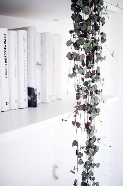 Goede 13x hangplanten voor binnen | plantjes - Vetplanten, Kamerplanten TU-28