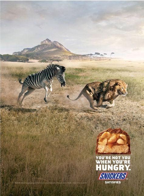 Wildes Zebra