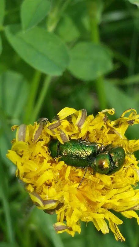 Foto Google Fotos Insekten Garten Blumen