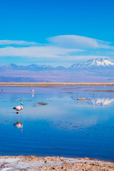 Discover The Unreal Landscapes In Atacama Chile That Will Blow Your Mind Travel Dreams Chile San Pedro