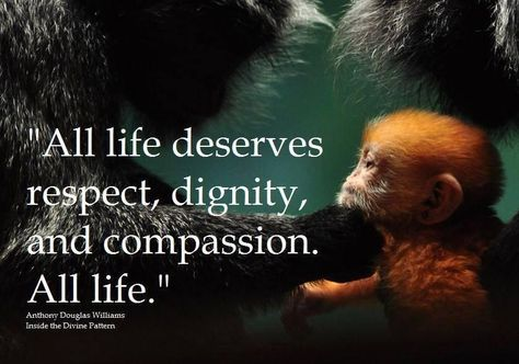 "Animal rights: ""All life deserves respect, dignity, and compassion. All Life. Save Our Earth, Vegan Quotes, Stop Animal Cruelty, Animal Quotes, Animal Rights, Embedded Image Permalink, Animals Beautiful, Beautiful Things, Compassion"