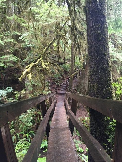 Marymere Falls Trail in Olympic National Park, Port Angeles, Washington, United States Oh The Places You'll Go, Places To Travel, Travel Destinations, Places To Visit, Composition Photo, Columbia River Gorge, All Nature, Travel Usa, Beach Travel