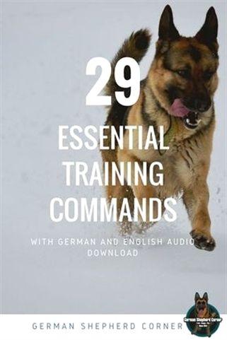 Dog Training Knife Dog Training 10 Minutes Dog Training 4