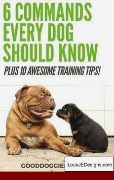 How To Train Your Dog To Walk With You Off Leash And Pics Of How