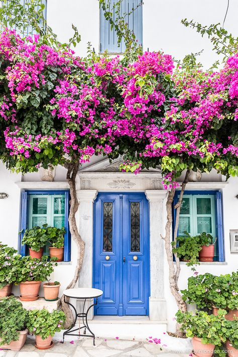 House with a blue door and pink flowers in the village of Pyrgos on the island of Tinos in Greece  #door #flowers #house #pyrgos #tinos #greece