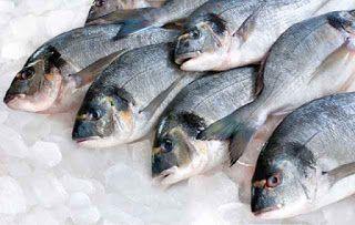 تفسير حلم صيد السمك وشراءه في المنام Fish Seafood Company Seafood