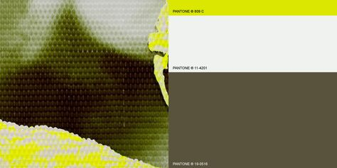 Deep Summer WGSN SS16 Colour trends. A stripped-back combination of dark silt green and white, with a sharp accent of bioluminescent yellow.