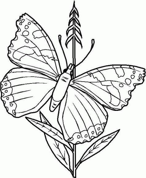 schmetterling malvorlagen  butterfly coloring page