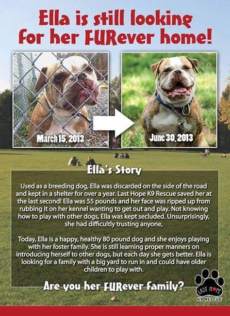 Name Ella Breed American Bulldog Age 5 Years Weight 80 Lbs