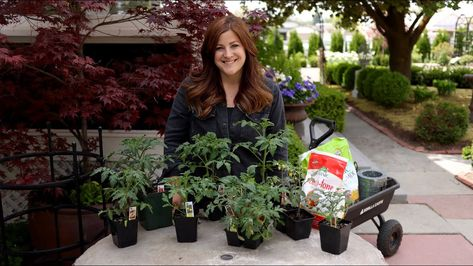 How Far Apart To Plant Tomatoes Need To Know Easy Plants To