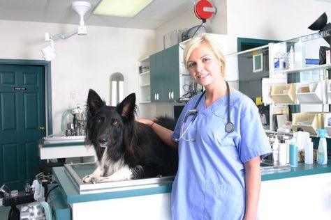 Veterinary Emergency Clinic Is The Best Local Emergency Vet Having Best Veterinarians In Ontario Http Emergency Vet Emergency Vet Clinic Vet Clinics