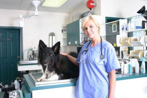 Veterinary Emergency Clinic Is The Best Local Emergency Vet Having Best Veterinarians In Ontario Http Emergency Vet Emergency Vet Clinic Vet Clinics