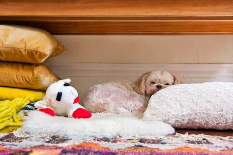 Treat your favorite four-legged buddy!  READ MORE...