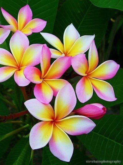 37 Ideas Flowers Pink Favorite Things In 2020 Amazing Flowers Plumeria Flowers Jungle Flowers