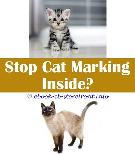 30++ What to spray to keep cats away info