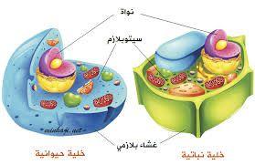 نتيجة بحث الصور عن مشروع عن دورة الجراثيم Plant Cell Plant And Animal Cells Animal Cell
