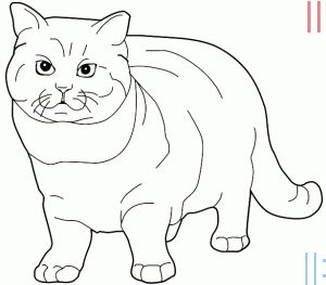 Evde Kolay Kedi Cizimleri Kolay Kedi Cizme Boyama Sayfalari Cizim Ve Kedi