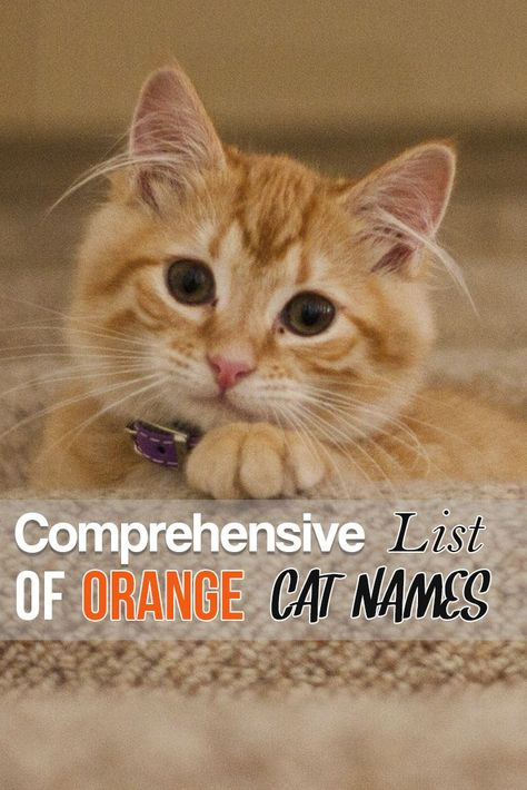 Comprehensive List Of Orange Cat Names Orange Tabby Cats Girl
