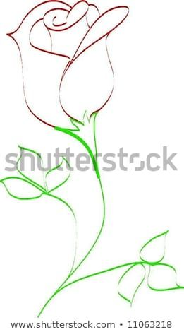 Simple Line Drawing Of Rose Bud Rose Drawing Simple Roses Drawing Flower Art Drawing
