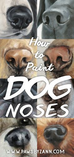 How to Paint and Draw Dog Noses - Malen & Zeichnen - Explore dog nose and nostril anatomy in pencil and paint with Pet Portrait Artist Zann Hemphill. Nose Drawing, Painting & Drawing, Dog Pencil Drawing, Animal Paintings, Animal Drawings, Dog Drawings, Funny Paintings, Watercolor Animals, Watercolor Art