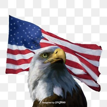 Hand Painted Elements Of American Flag Of American Eagle Pulsatilla Ferocious National Flag National Bird Png Transparent Clipart Image And Psd File For Free American Eagle National Flag Flag Painting