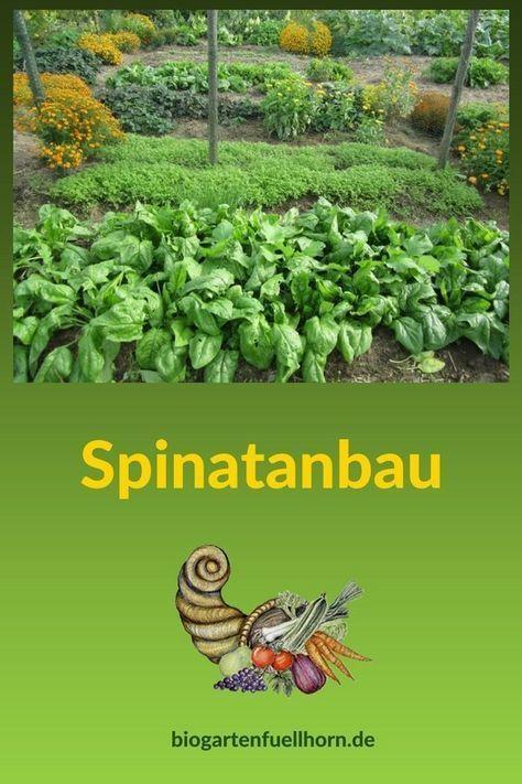 Spinatanbau Im Garten Biogarten Fullhorn Garden Types Landscaping Plants Growing Spinach